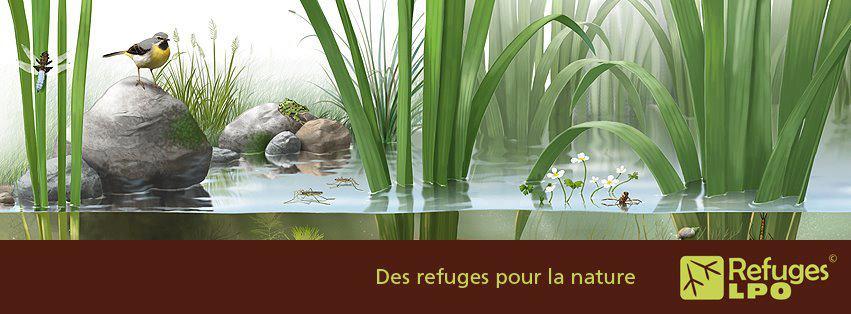 https://cdnfiles2.biolovision.net/franche-comte.lpo.fr/userfiles/proteger/64095361397530548773171091707n.jpg