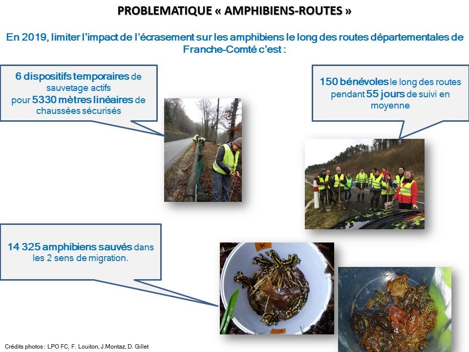 https://cdnfiles2.biolovision.net/franche-comte.lpo.fr/userfiles/proteger/AmphibiensRoutes/Bilan2019actionssauvetagerteamphFCVDec2019.jpg