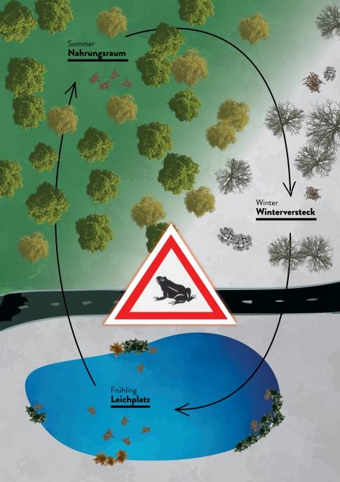 https://cdnfiles2.biolovision.net/franche-comte.lpo.fr/userfiles/proteger/AmphibiensRoutes/SchmaTypeMigrationamphibiensKARCH.jpg