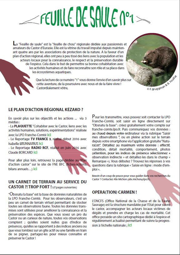 https://cdnfiles2.biolovision.net/franche-comte.lpo.fr/userfiles/proteger/Castor/P1feuillesaule.jpg