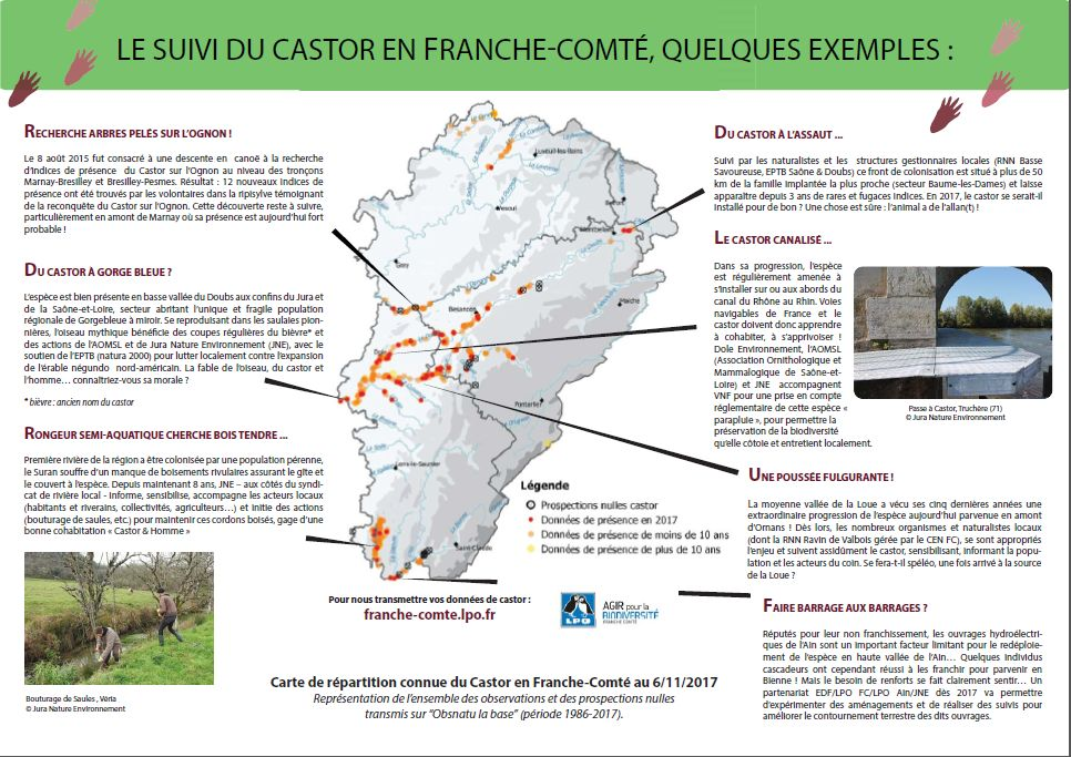 https://cdnfiles2.biolovision.net/franche-comte.lpo.fr/userfiles/proteger/Castor/P2feuillesaule.jpg