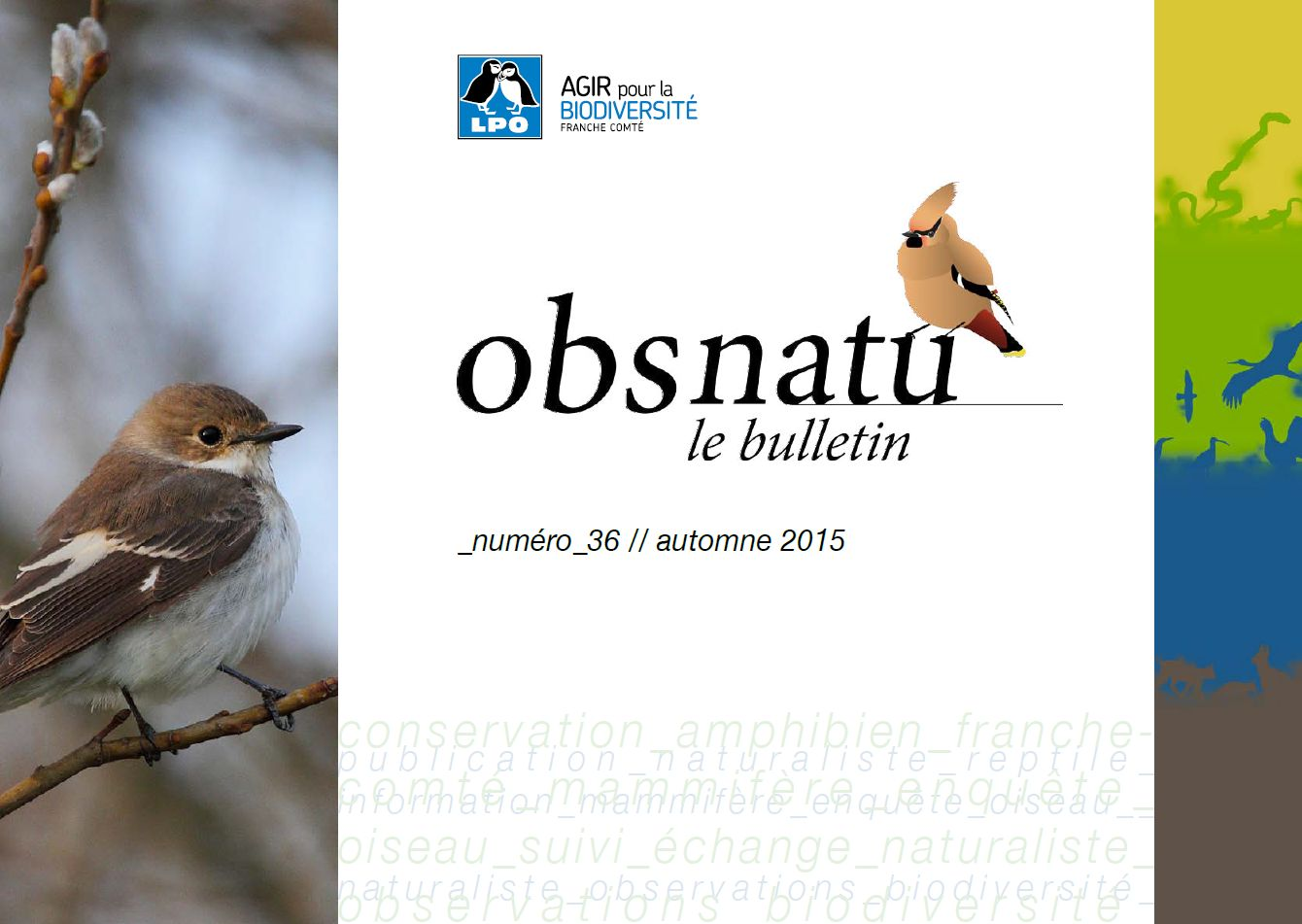 https://cdnfiles2.biolovision.net/franche-comte.lpo.fr/userfiles/publications/Obsnatubulls/Obsnatun36automne2015couv.jpg