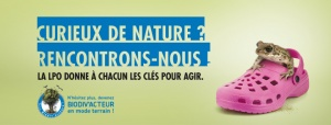https://cdnfiles2.biolovision.net/vienne.lpo.fr/userfiles/BiodivactDecouvrirGrenouilleVign.jpg