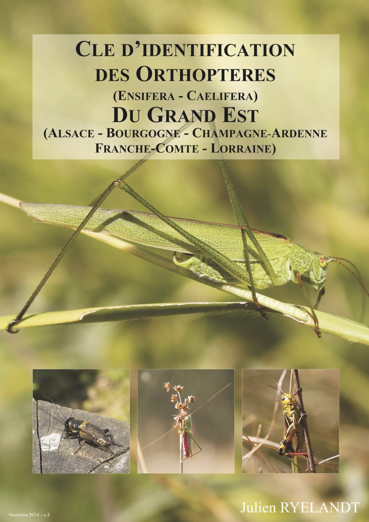 https://cdnfiles2.biolovision.net/www.faune-alsace.org/userfiles/Insectes/ORTHOPTERA/J-RYELANDT2014cleorthopteres-gd-estv3.jpg