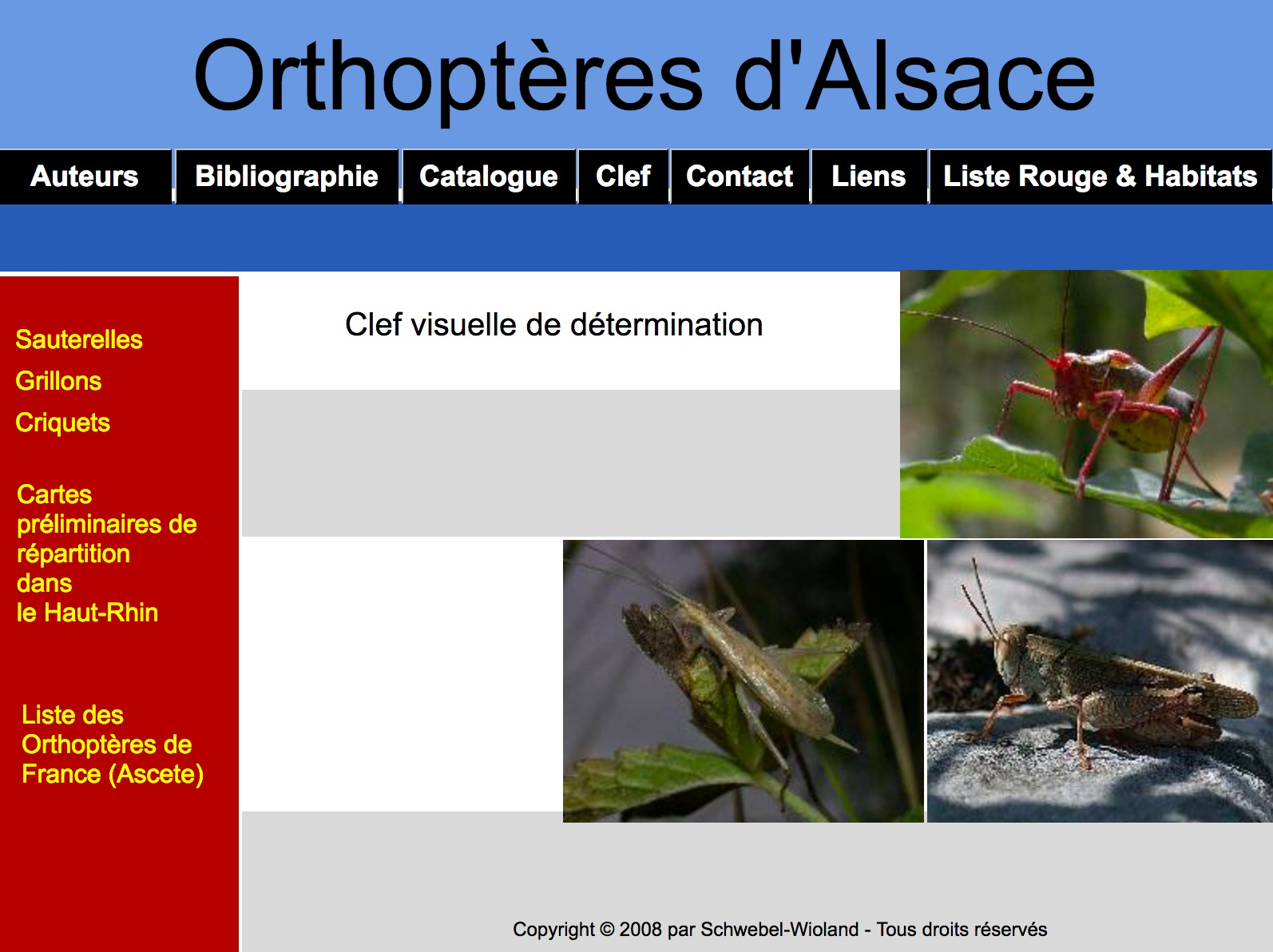 https://cdnfiles2.biolovision.net/www.faune-alsace.org/userfiles/Insectes/ORTHOPTERA/sitewebLS.jpg