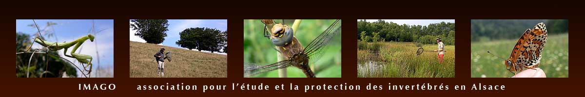 https://cdnfiles2.biolovision.net/www.faune-alsace.org/userfiles/associations/banniereIMAGO.jpg