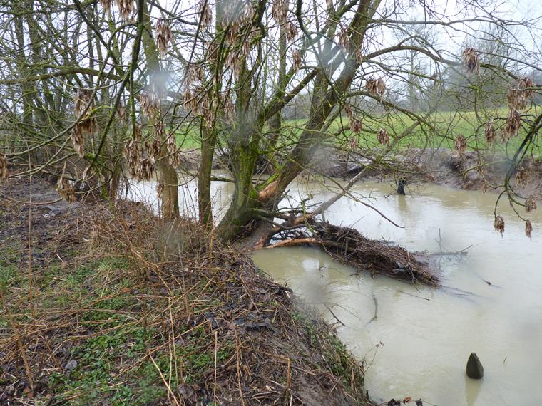 https://cdnfiles2.biolovision.net/www.faune-alsace.org/userfiles/gepma/castor/Ecorcages-sur-saules-Largue-a-Balschwiller-68-fev-2014.jpg
