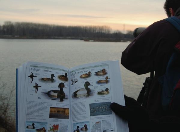 https://cdnfiles2.biolovision.net/www.faune-alsace.org/userfiles/modeemploi/wetlands/wetlands.jpg
