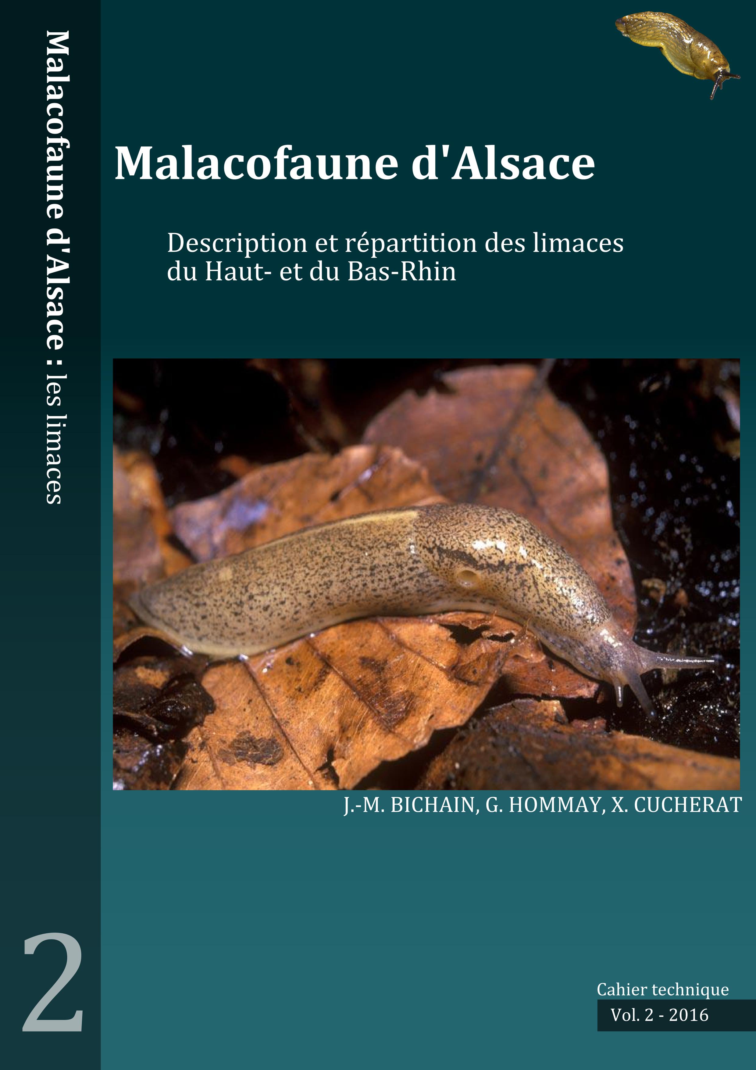 https://cdnfiles2.biolovision.net/www.faune-alsace.org/userfiles/mollusques/limace2016.jpg