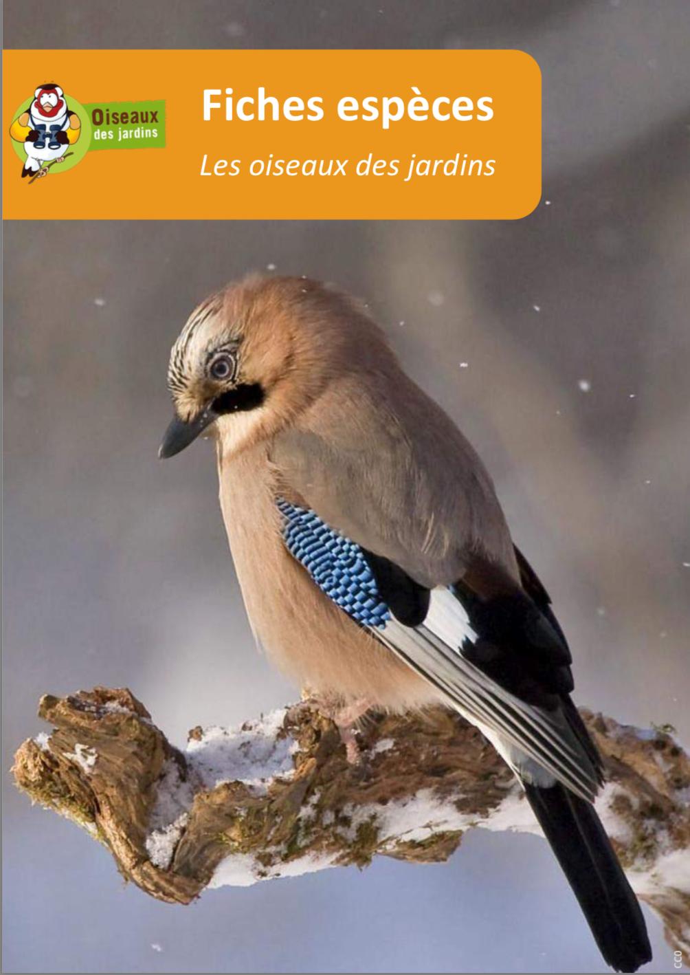 https://cdnfiles2.biolovision.net/www.faune-anjou.org/userfiles/divers/Fichestoutesespces.pdf