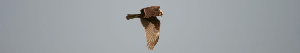62b3532fa829a0 Livret d'aide à la détermination des fouines et martres - www.faune ...