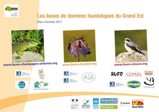 https://cdnfiles2.biolovision.net/www.faune-champagne-ardenne.org/userfiles/Bilandactivite/BilanVisioNatureGE2017-8639.jpg