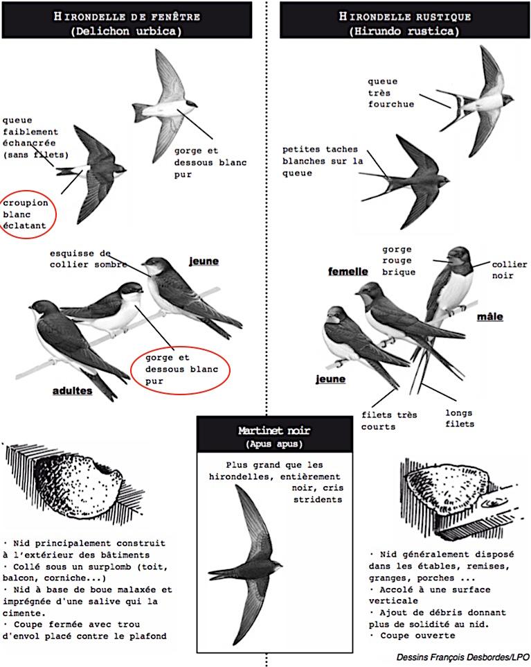 https://cdnfiles2.biolovision.net/www.faune-champagne-ardenne.org/userfiles/OiseauDeLAnnee/DistinctionHFHR.jpg