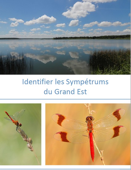 https://cdnfiles2.biolovision.net/www.faune-champagne-ardenne.org/userfiles/odonates/identificationsympetrums.jpg
