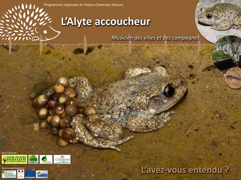 https://cdnfiles2.biolovision.net/www.faune-charente-maritime.org/userfiles/AlyteCapture.JPG