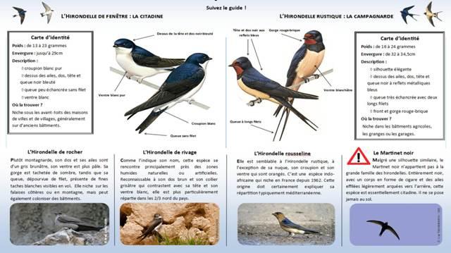 https://cdnfiles2.biolovision.net/www.faune-charente-maritime.org/userfiles/Identifier-les-hironelles-du-btilight.jpg
