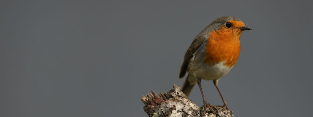 A webinar on common bird monitoring schemes