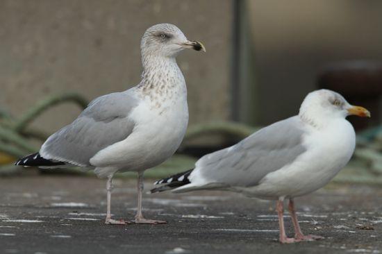 observation des oiseaux datant