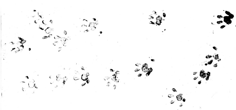 https://cdnfiles2.biolovision.net/www.faune-france.org/userfiles/FauneFrance/FFnews/Empreinteshrissonlite.jpg