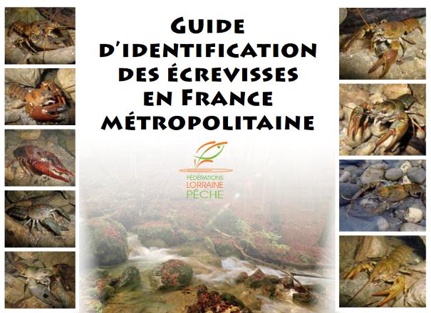 https://cdnfiles2.biolovision.net/www.faune-limousin.eu/userfiles/Crustaces/miniatureguidecrevissesLorrainelight.png