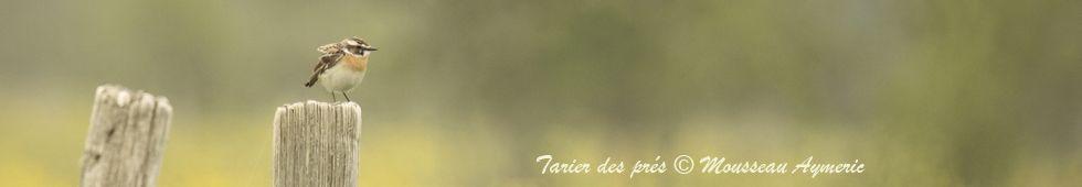 CHD44 (1999 2009) faune loire