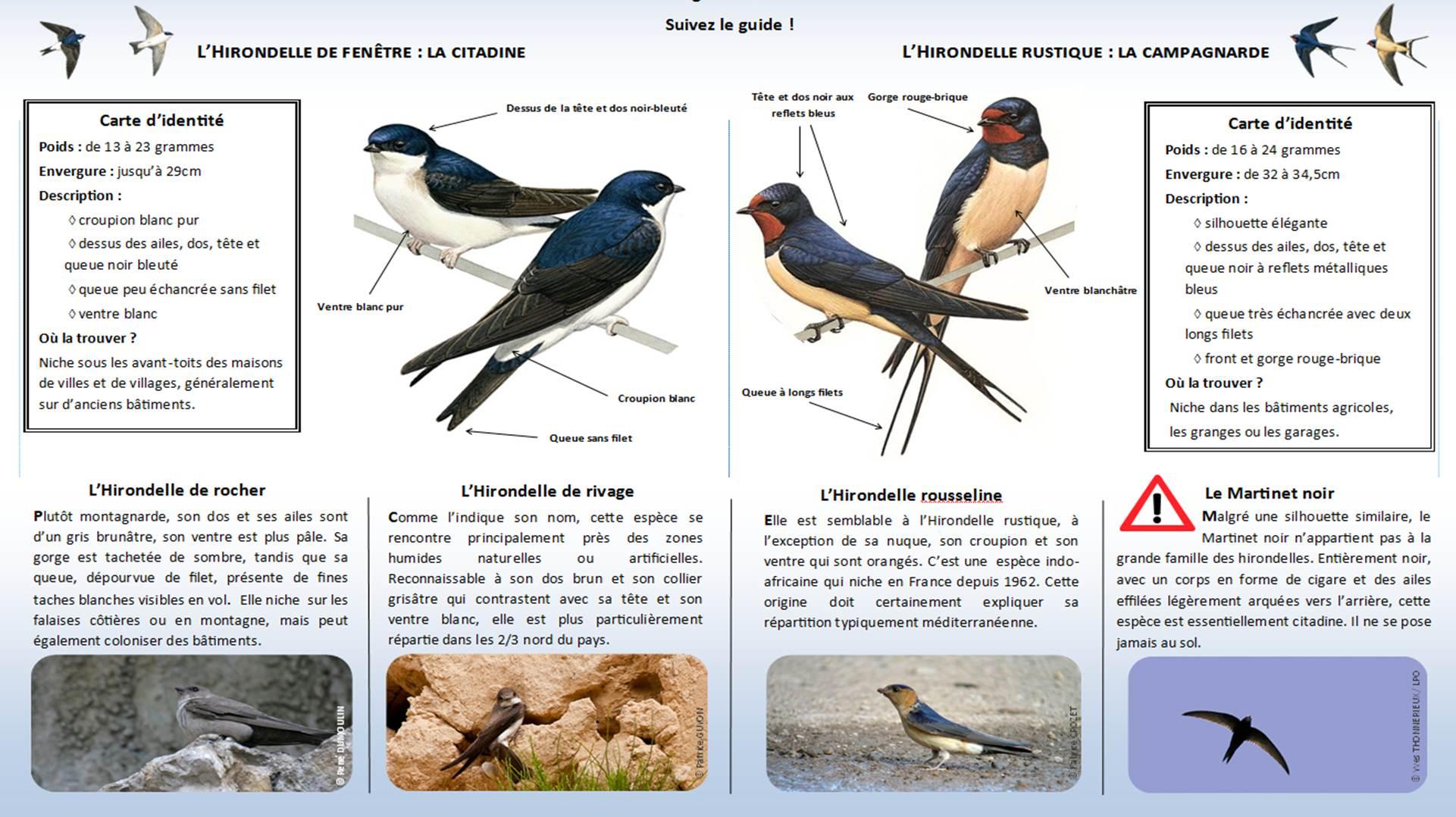 https://cdnfiles2.biolovision.net/www.faune-lorraine.org/userfiles/Enqutehirondelle/Identifier-les-hironelles-du-bti.jpg