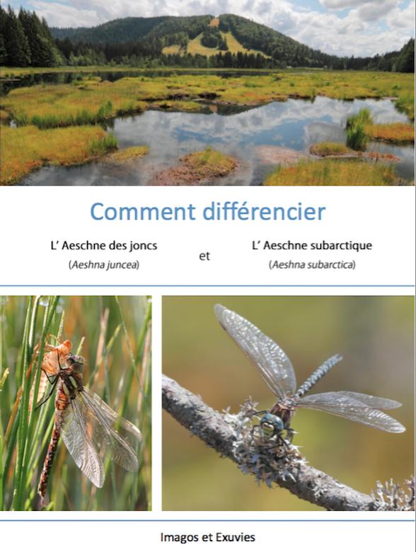 https://cdnfiles2.biolovision.net/www.faune-lorraine.org/userfiles/ODONATES/Documentsdidentification/Capturedecran2018-08-09a14.18.06.png
