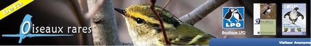 https://cdnfiles2.biolovision.net/www.faune-lorraine.org/userfiles/PORTAILSNATIONAUX/Oiseauxrares.jpeg