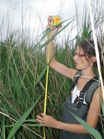 https://cdnfiles2.biolovision.net/www.faune-lr.org/userfiles/LPO34etudesexpertisessmall.JPG