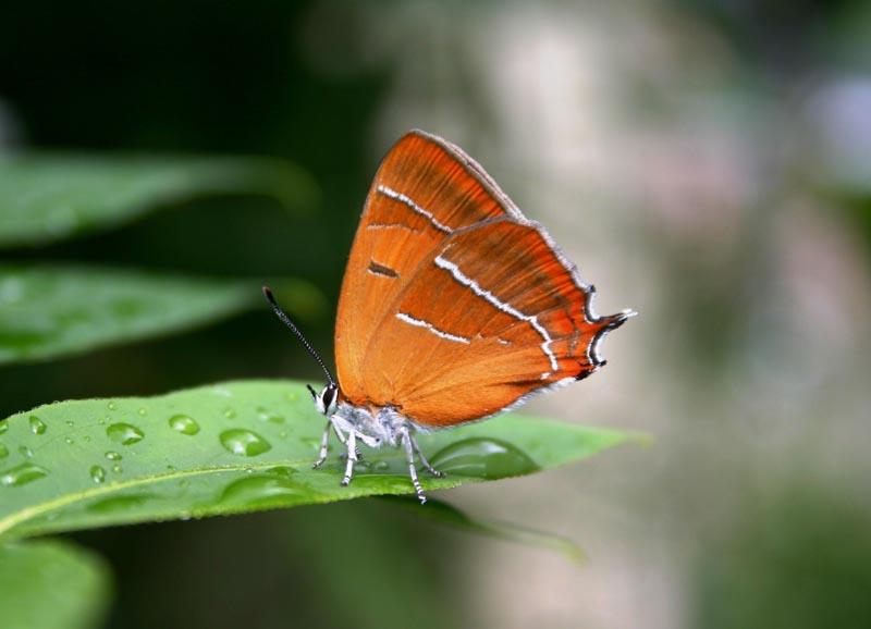 https://cdnfiles2.biolovision.net/www.faune-maine.org/userfiles/DaniellandemaineThclabouleau3.JPG