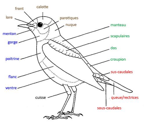 https://cdnfiles2.biolovision.net/www.faune-reunion.fr/userfiles/lecoindunaturaliste/topo2oiseaucopy.jpg