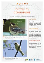 https://cdnfiles2.biolovision.net/www.faune-rhone.org/userfiles/OiseauxDesJardins/Fichesidentification/FICHESCOMPARATIVES01Jeunesmsanges.jpg
