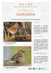 https://cdnfiles2.biolovision.net/www.faune-rhone.org/userfiles/OiseauxDesJardins/Fichesidentification/FICHESCOMPARATIVES02Moineauaccenteur.jpg