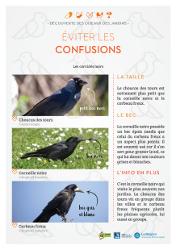 https://cdnfiles2.biolovision.net/www.faune-rhone.org/userfiles/OiseauxDesJardins/Fichesidentification/FICHESCOMPARATIVES03Corvids.jpg