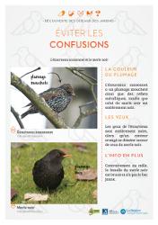https://cdnfiles2.biolovision.net/www.faune-rhone.org/userfiles/OiseauxDesJardins/Fichesidentification/FICHESCOMPARATIVES04Etourneaumerle.jpg