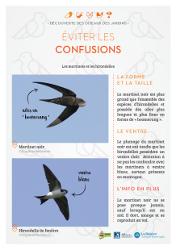https://cdnfiles2.biolovision.net/www.faune-rhone.org/userfiles/OiseauxDesJardins/Fichesidentification/FICHESCOMPARATIVES05Martinethirondelle.jpg