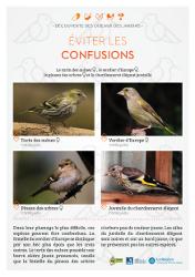 https://cdnfiles2.biolovision.net/www.faune-rhone.org/userfiles/OiseauxDesJardins/Fichesidentification/FICHESCOMPARATIVES06Fringilles.jpg