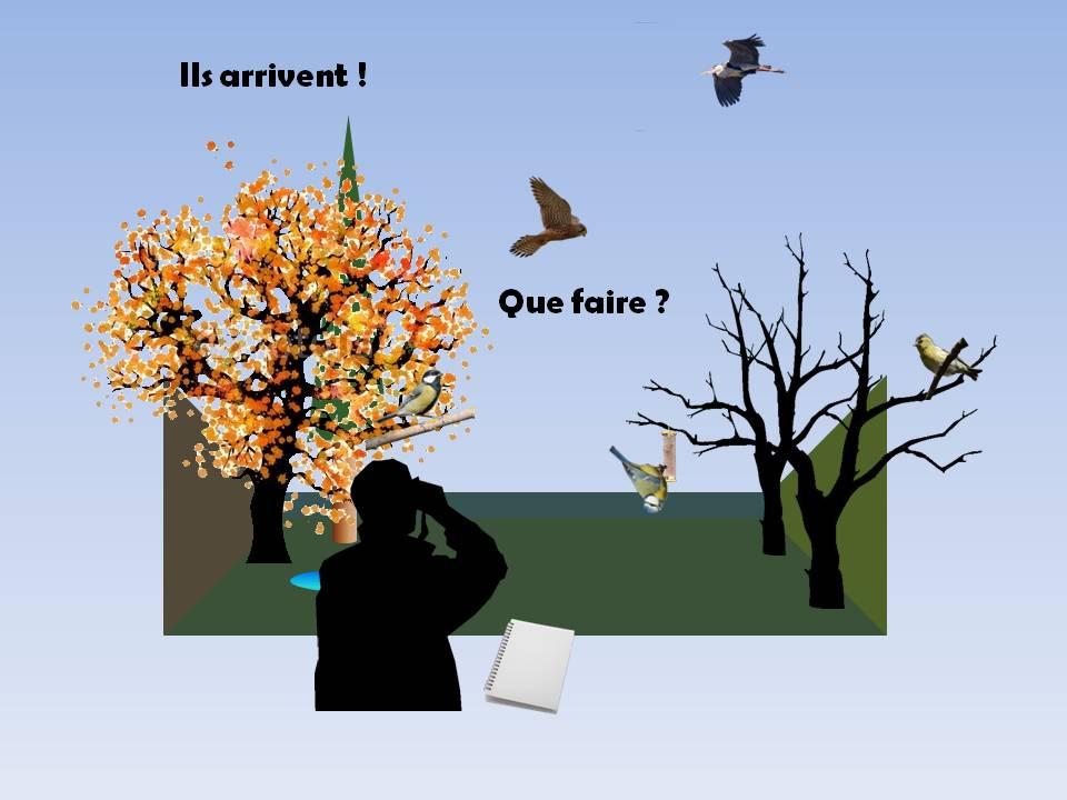 https://cdnfiles2.biolovision.net/www.faune-rhone.org/userfiles/OiseauxDesJardins/TutoProtocole/PresentationProtocole2.JPG