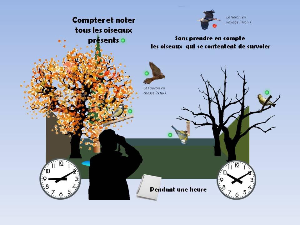 https://cdnfiles2.biolovision.net/www.faune-rhone.org/userfiles/OiseauxDesJardins/TutoProtocole/PresentationProtocole3.JPG