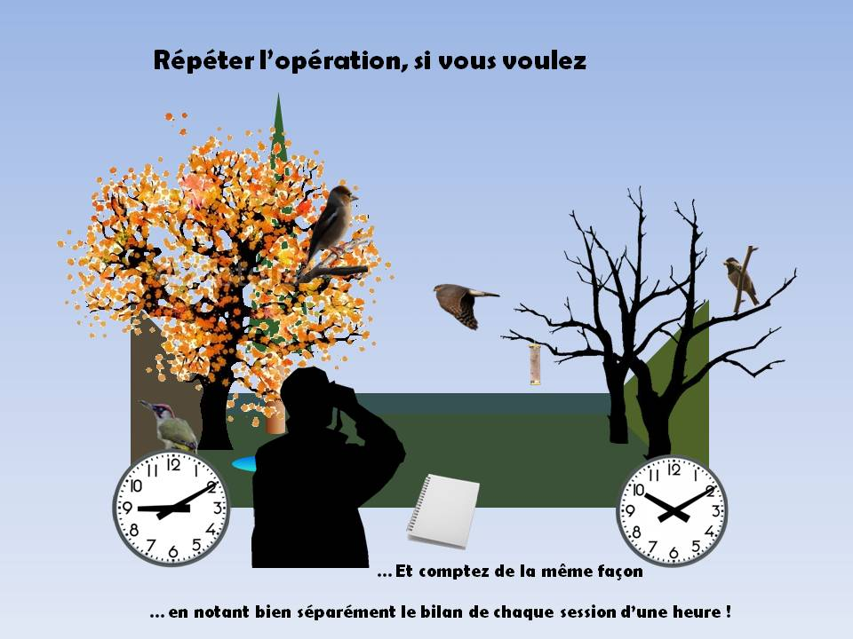 https://cdnfiles2.biolovision.net/www.faune-rhone.org/userfiles/OiseauxDesJardins/TutoProtocole/PresentationProtocole4.JPG