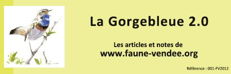 https://cdnfiles2.biolovision.net/www.faune-vendee.org/userfiles/Gb2.0.jpg