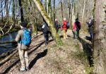 Samedi 20 mars 202, Marais et Bois des Douves, bord de La Versoix