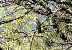 Partons à l'écoute de l'alouette lulu et des espèces des sous-bois
