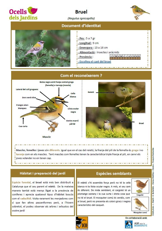 https://cdnfiles2.biolovision.net/www.ocellsdelsjardins.cat/userfiles/bruel.jpg