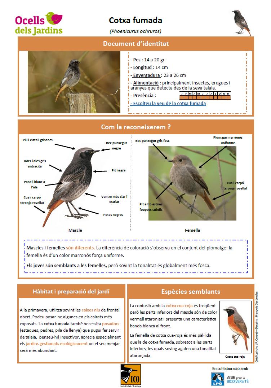 https://cdnfiles2.biolovision.net/www.ocellsdelsjardins.cat/userfiles/cotxafumada.png