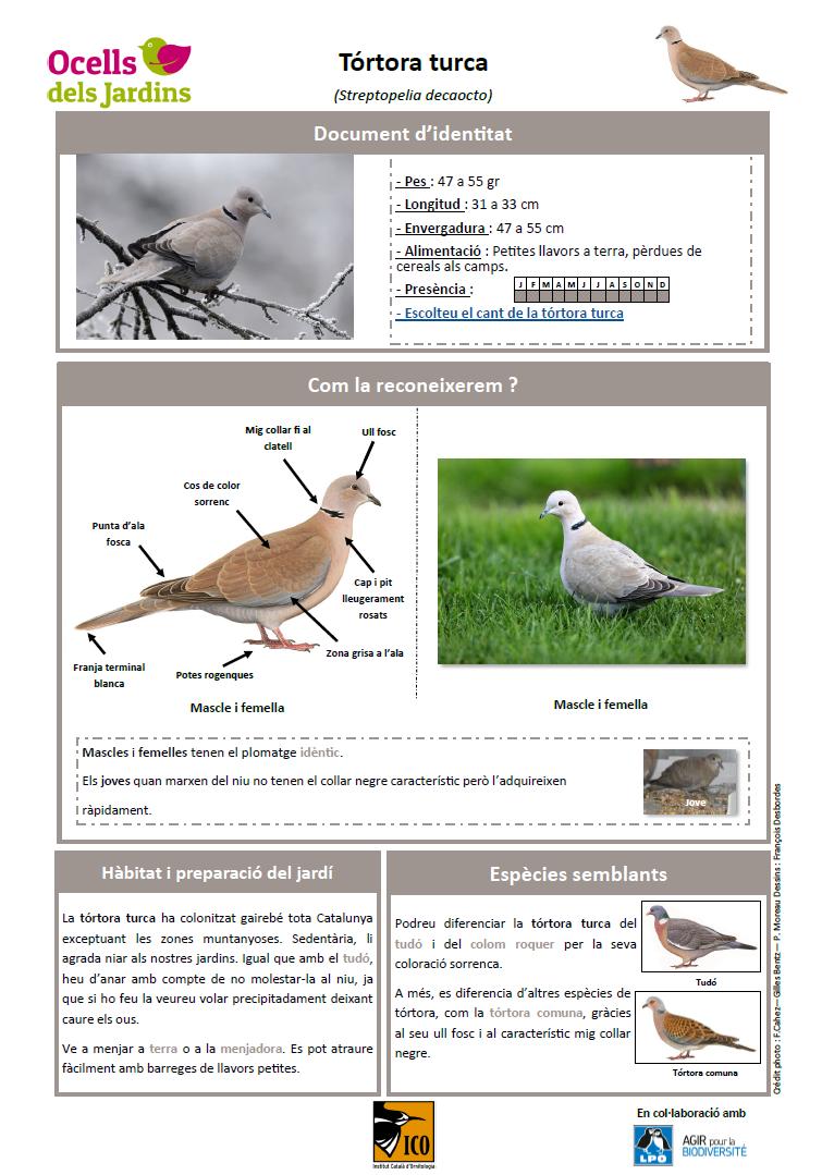 https://cdnfiles2.biolovision.net/www.ocellsdelsjardins.cat/userfiles/strtur.png