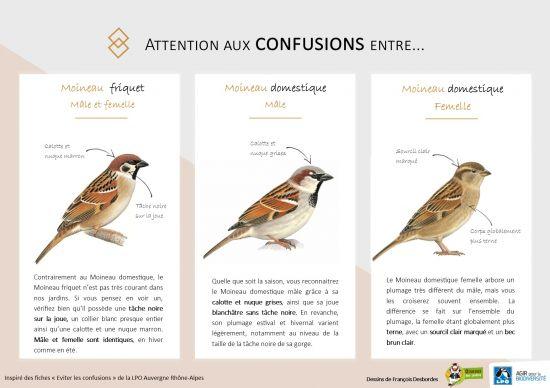 4e5443a5bf2 Toutes les nouvelles - www.oiseauxdesjardins.fr