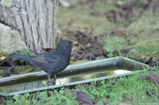 Toutes les nouvelles - www.oiseauxdesjardins.fr