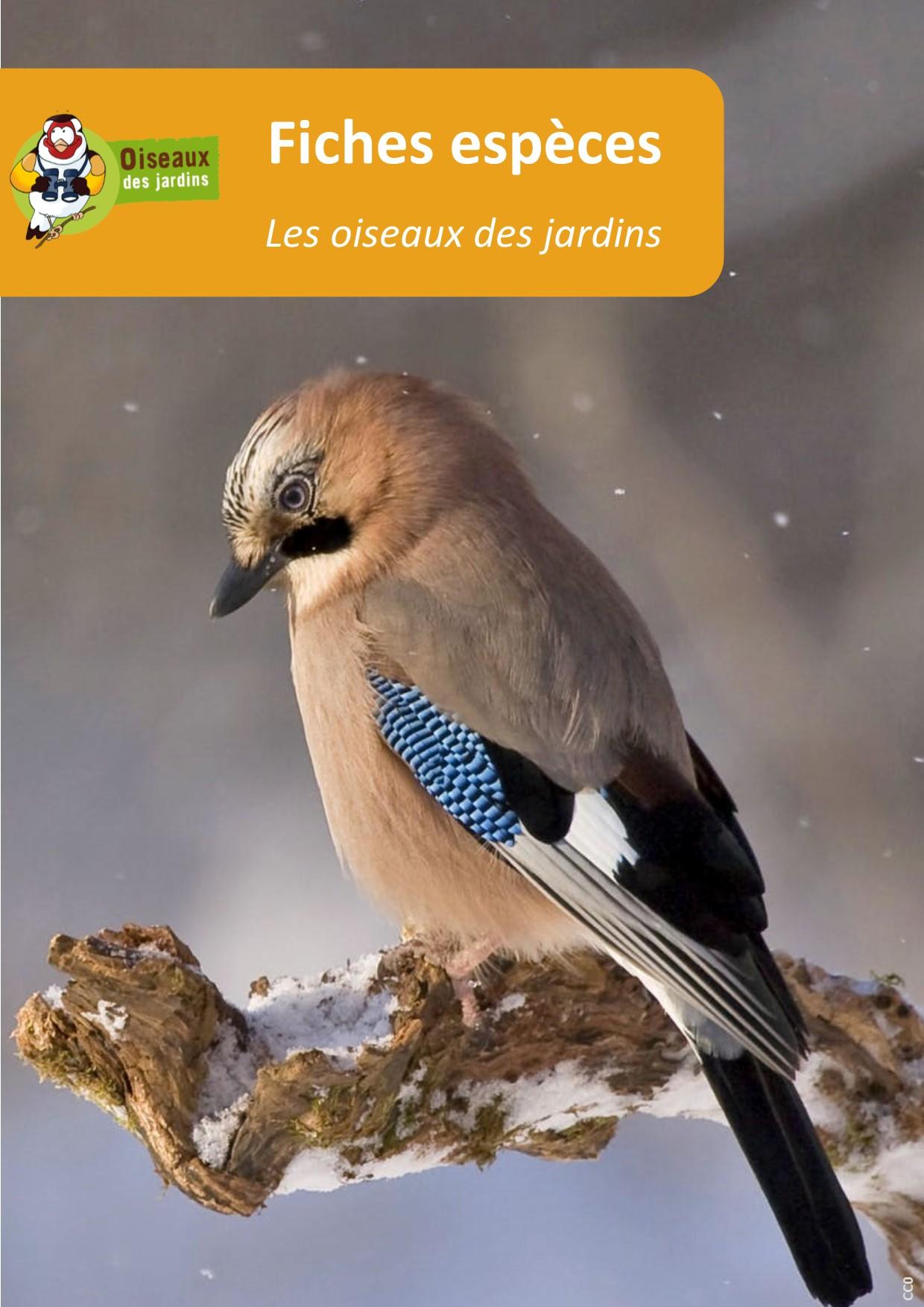 https://cdnfiles2.biolovision.net/www.oiseauxdesjardins.fr/userfiles/Fichesespces/Composition2.jpg