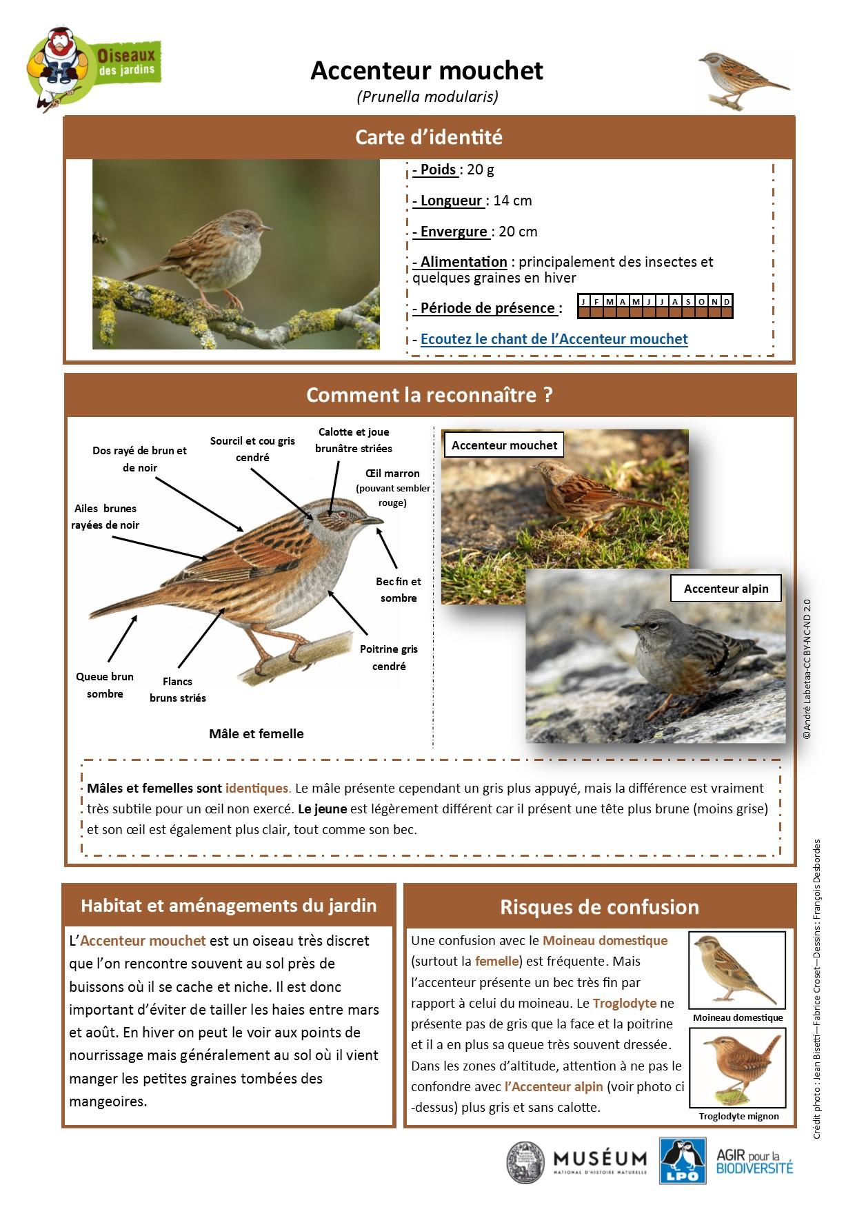 https://cdnfiles2.biolovision.net/www.oiseauxdesjardins.fr/userfiles/Fichesespces/FicheespceACM.pdf